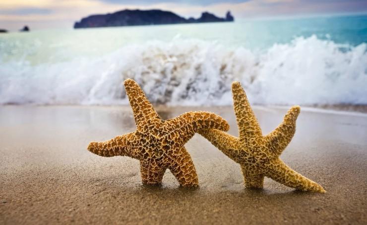 Две морские звезды на пляже: обои, фото, картинки на рабочий стол в высоком  разрешении
