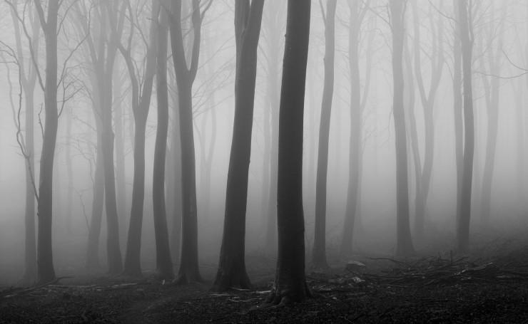 лес стол туманный фото на рабочий