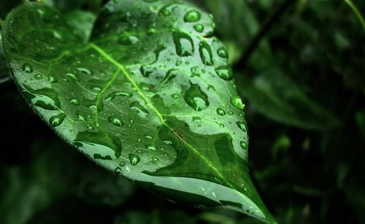 krupno-mokrie